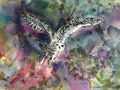 Anne Fetterly_Snowy owl_2015
