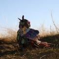 Pavorotti Prairie bird susan fae art